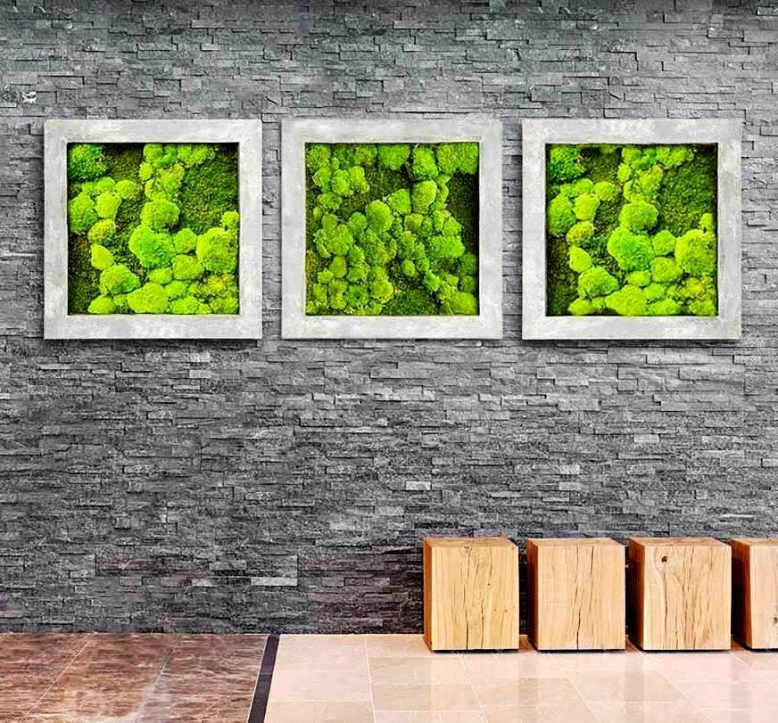 licheni decorativi